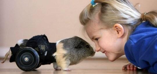 Patch the Guinea Pig