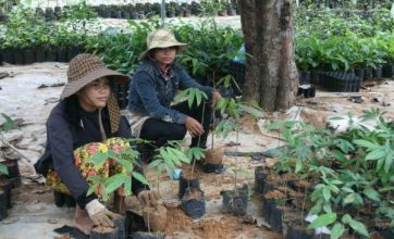 Cambodia has an eco project with bite