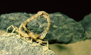 Scorpions, wallabies and aadvarks 'invading Britain'