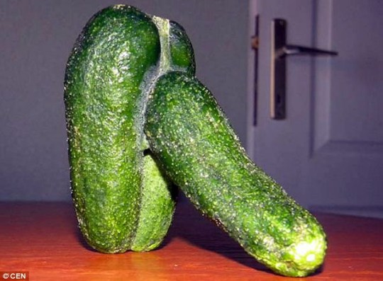 Image result for cucumber phallic""