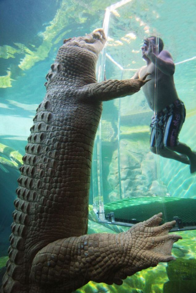 Strewth: A visitor to the Crocosaurus Cove park in Darwin eyeballs Crocodile Dundee's, Burt