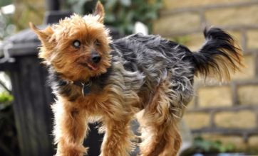 Is Billy the Terrier the world's oldest dog?