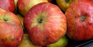 Dangerous: Apples