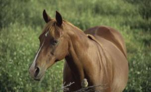 Derek Woods had an 'unfathomable' interest in horses