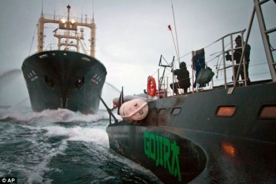 Violent clashes force Japan to call off whale hunt | Metro News