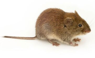 Essex Chinese restaurant shut down after live mice discovered in noodles