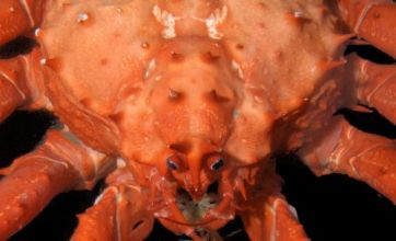 Antarctic study uncovers weird and wonderful marine life