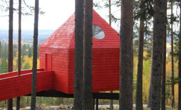 Live the high life at hotel among the forest branches