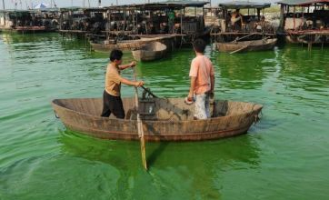 Smelly green algae threatens to invade China's east coast