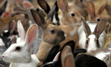 Animal tests increase to 'disgraceful' 3.7million, Home Office figures reveal