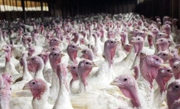 Deadly new strain of bird flu set to cause havoc in Europe this winter