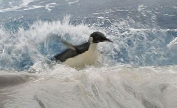 Happy Feet the penguin back in Antarctic after beaching 3,000km away