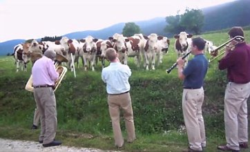 Jazz band go viral after performing in France… to a herd of cows