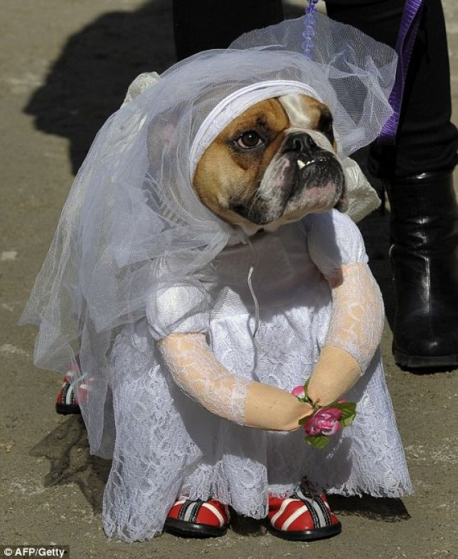 Tank the English Bullodog as the Runaway Bride attends the 21st Annual Tompkins Square Halloween Dog Parade in New York
