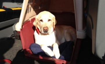 Taxi drives to Madrid from London to pick up dog