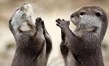 Cute alert: Praying otters picture 'captures the Lord at work'