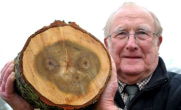 E.Tree: Face of sci-fi alien E.T spotted by pensioner in Wiltshire tree trunk