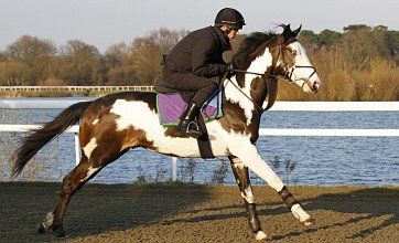 Patch perfect skewbald thoroughbred prepares for horse racing debut