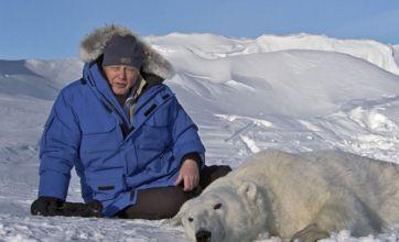 Frozen Planet takes on Celebrity Juice and Sherlock in TV Bafta Awards
