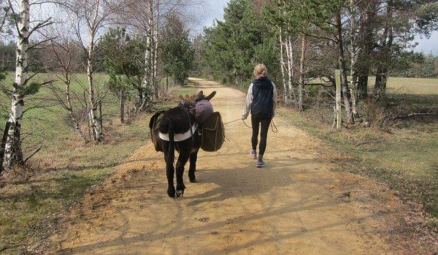 Max the donkey