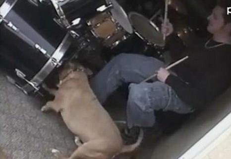 Dog, drumming, youtube