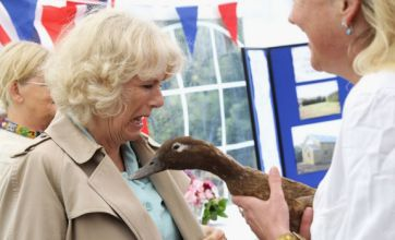 Duchess of Cornwall attacked by a duck: Caption competition