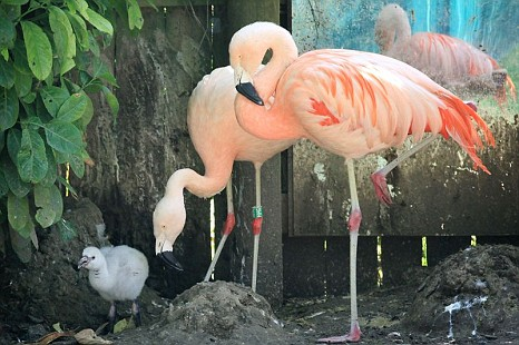 Barry White, Flamingo, Drusillas Park, Alfriston