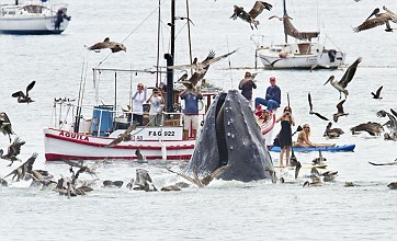 Photographer catches breathtaking whale snaps while looking for birds