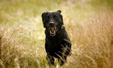 Fenton chases a T-Rex in 'remastered' ad for 4G network EE