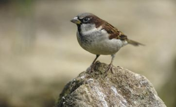 Forty-four million breeding birds 'lost in four decades', report claims