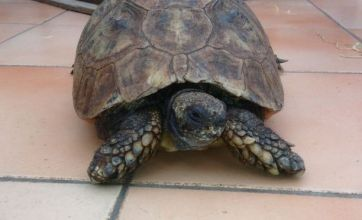 130-year-old tortoise Thomas celebrates a shell of a life