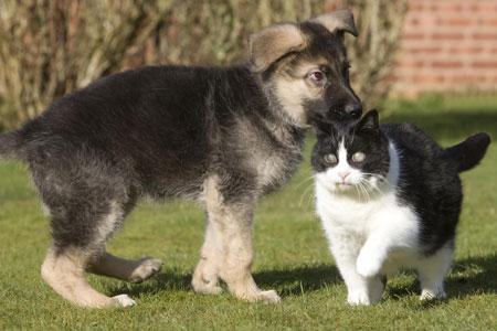 Top Pet Buys – Cat Crinkle Bags