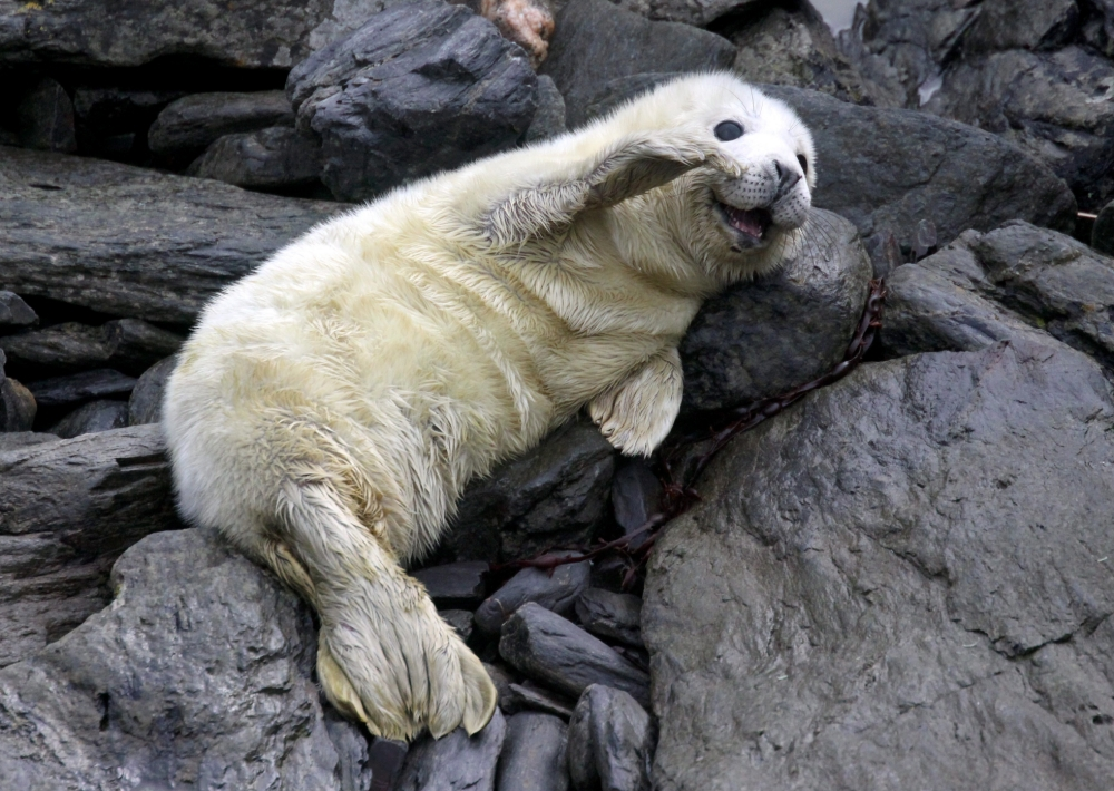 Top 10 cute animals to cheer you up on Blue Monday