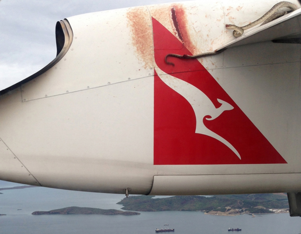 Snake on a plane video… Python trapped on wing of Qantas flight