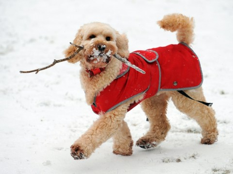 Top Pet Buys – How to keep your dog warm this winter