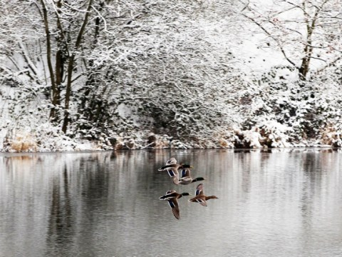 Gallery: Snow and Ice across the UK January 22nd 2013