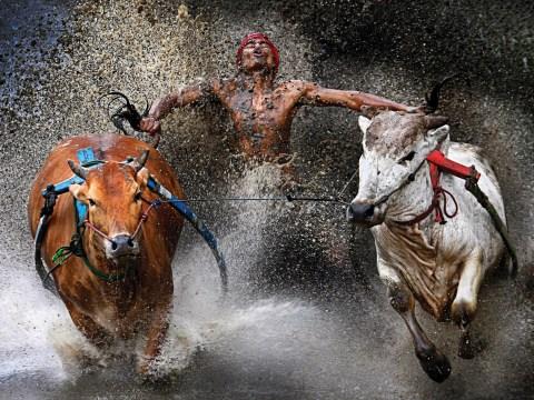 Gallery: World Press Photo 2013 Winners