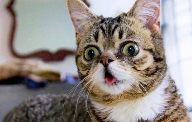Lil Bub & Friendz: Internet cat meme film gets first trailer