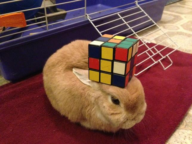 Vinnie the rabbit making head-lines with balancing antics