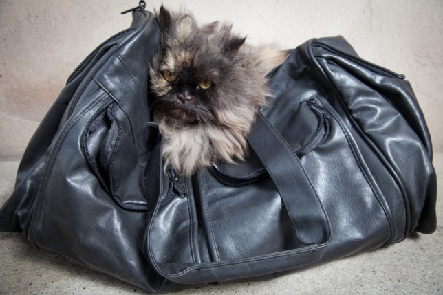 Bisou the cat