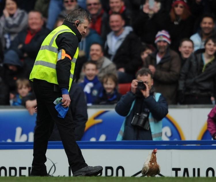 Chicken invades pitch during Blackburn v Burnley match