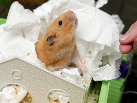 Hamster resurrection: Pet rises from the grave at Easter after being buried in garden