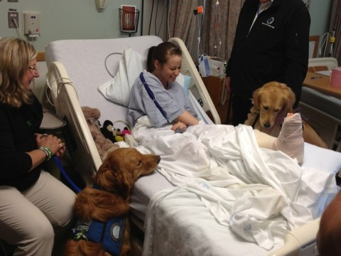 Boston marathon bombings: Victims comforted by special therapy dogs
