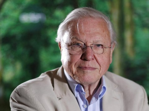David Attenborough: Humans have stopped evolving and the future bleak if people have large families