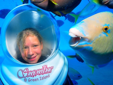 Photobombing parrotfish hooked on hijacking holiday snaps