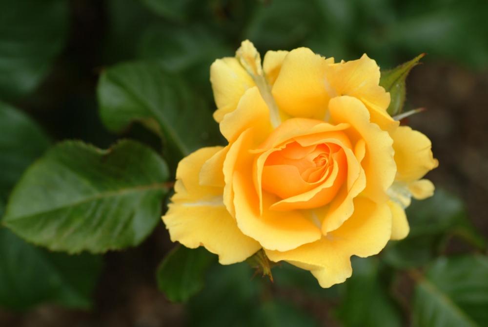 Chelsea Flower Show winner Linda Porrett recommends blooms on a budget