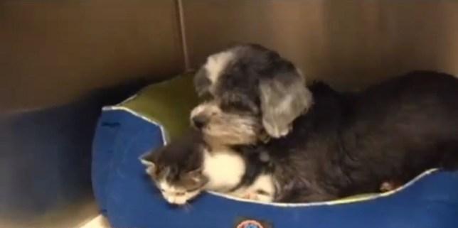 Dog adopts cat in South Carolina