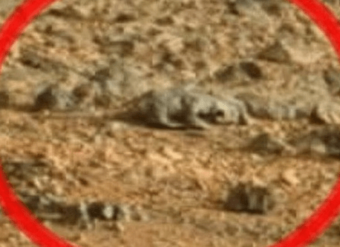 Life on Mars? Lizard 'spotted' on the surface of the red planet