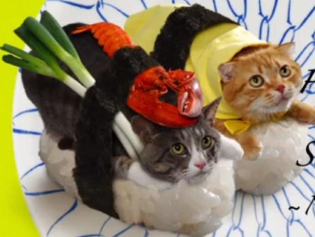 Sushi Cat, Japan