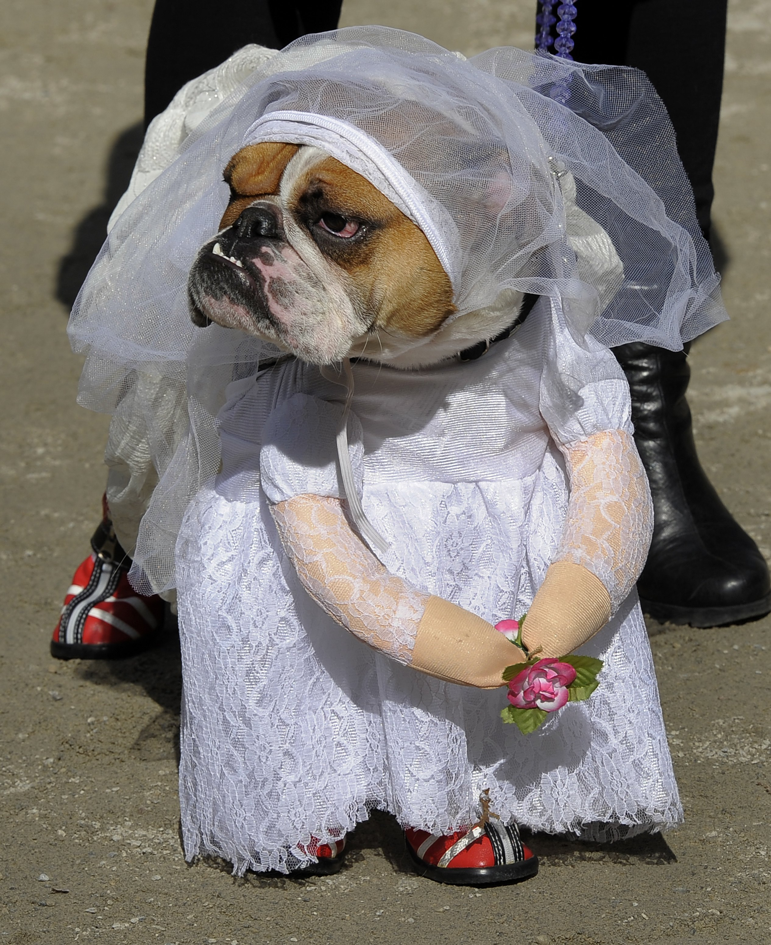 Gallery: Top 10 pictures of animals in clothes